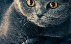 Enfermedades virales felinas: las más comunes