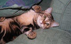 Il gatto gioca di notte: cosa fare e come impedirlo