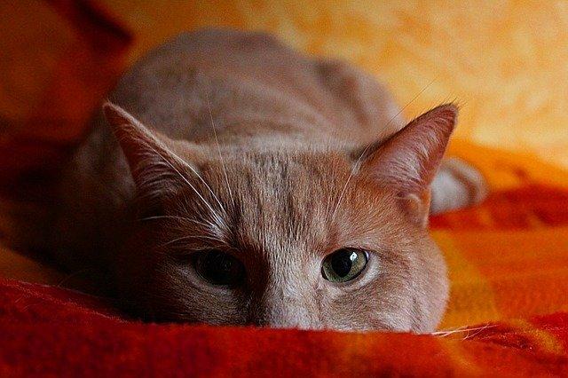 Animali in vacanza: gli animali soffrono il mal di aereo?