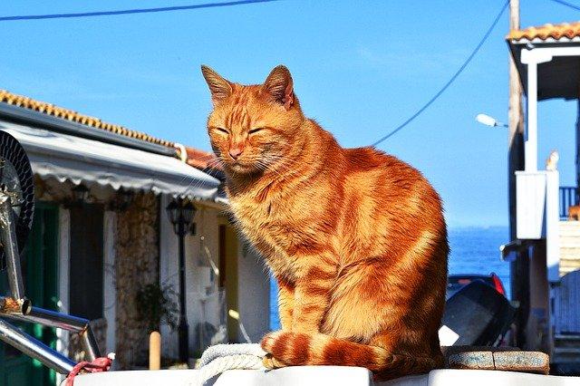 Animali in vacanza in traghetto: i problemi che possono riscontrare