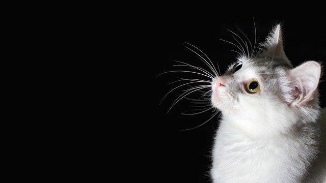 Enfermedades intestinales en gatos: tipos y síntomas
