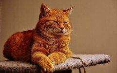 El gato de la vega: entre la noticia y el rumor