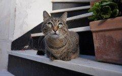 Sgridare i gatti non serve a nulla: meglio usare il rinforzo positivo