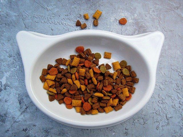 Cantidad comida gato: ¿cuánto debe comer mi gato?