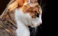 Mi gato vomita: reconoce cuando puede ser un síntoma grave