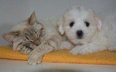Parlare con cane e gatto è segno di intelligenza