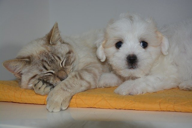 Parlare Con Cane E Gatto è Segno Di Intelligenza Dogalize