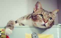Enfermedades de los Gatos: Diarrea en gatos sintomas