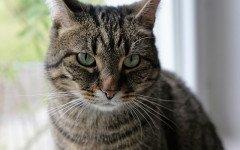 Gatto stressato potrebbero essere le troppe coccole