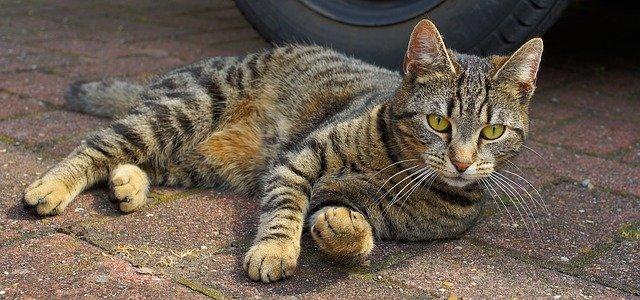 Sistema nervioso central del gato: componentes y funcion