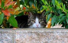 Cosa fare in caso di smarrimento del gatto