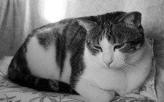 Lebbra felina: sintomi, diagnosi e terapia