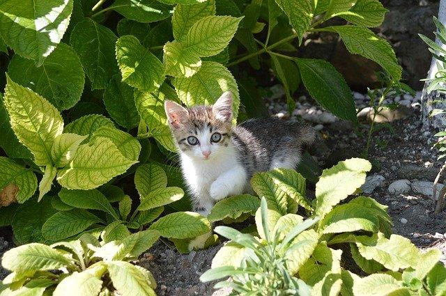 Adozione dei gatti: quali sono i 5 miti da sfatare?