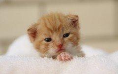 Cómo alimentar un gato recién nacido Consejos