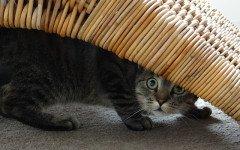 Il gatto si nasconde: scopriamo i motivi di tale comportamento