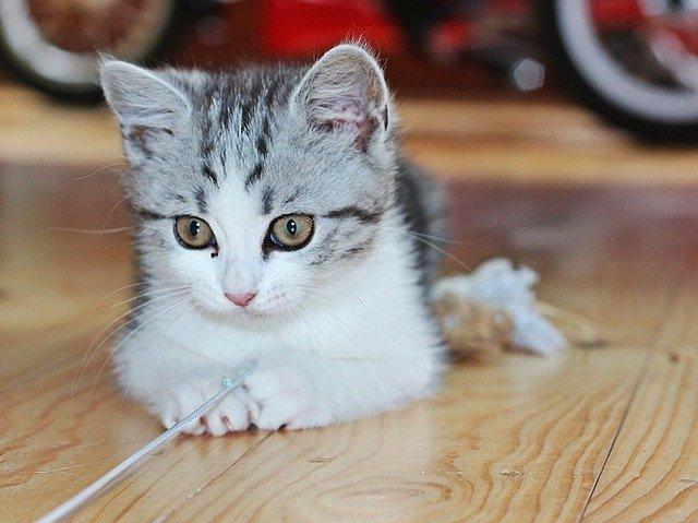 Il gatto gioca durante la notte: cosa non fare