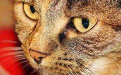 Comida gato: Mi gato vomita la comida!