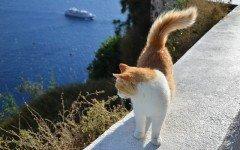 Animali in vacanza: i gatti soffrono il mal di mare?