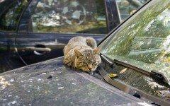 Animali in vacanza: i gatti soffrono il mal di macchina