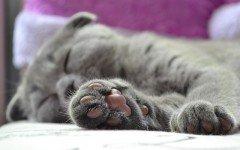 Unghie incarnite nel gatto: cosa fare?