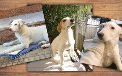 Appello per adozione: splendidi cuccioli cercano casa