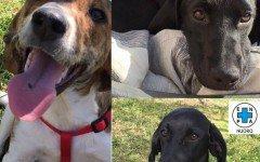 Appello per adozione: Debbie, Kenya e Karen cercano casa!