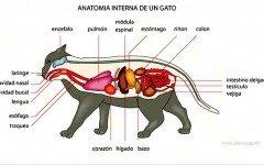 sistema respiratorio de los gatos Sistema respiratorio del gato: la máquina perfecta