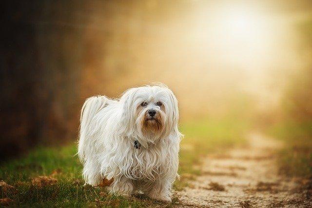 Amebiasi nel cane: cause, sintomi, diagnosi e terapia