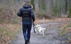In vacanza con un animale: i comportamenti da evitare