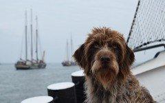 Animali in vacanza in traghetto: come farli viaggiare