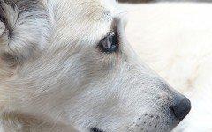 Ultimi giorni di vita del cane: che cosa fare?