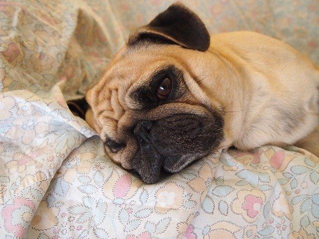 Enfermedades digestivas de los perros: conoce tu mascota