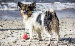 Viaggiare con il cane a Malta: passaporto, microchip e antirabbica