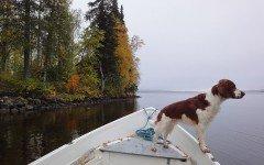 Animali in vacanza: i cani soffrono il mal di mare?