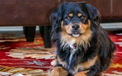 In vacanza con un animale: come scegliere la struttura pet friendly
