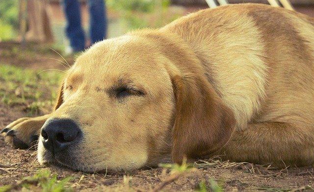 Enfermedades en los huesos de los perros: lo que debes saber