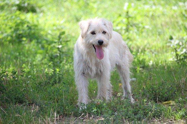 Il cartello Attenti al cane e le responsabilità del padrone