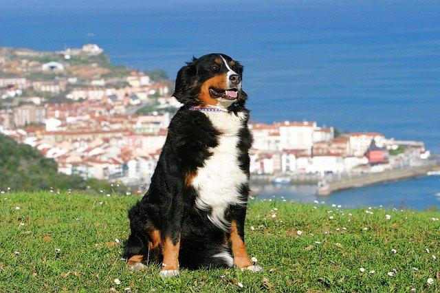 Animali in vacanza: qual è la città italiana più pet friendly?