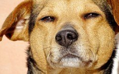 Enfermedades de los perros callejeros: una triste situación