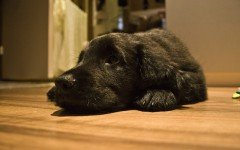 Interventi chirurgici nel cane: pre e post operatorio