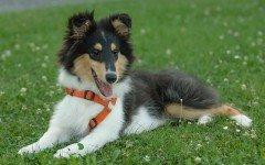 Alimentazione e salute del cane: prendersi cura del proprio peloso