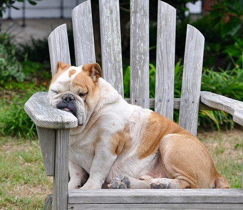 Affaticamento del cane: sintomi e cause