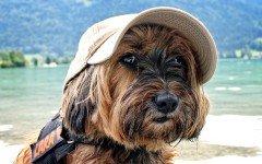Animali in vacanza: visitare la città di Piombino