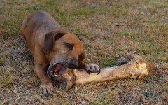 Mai più ossa ai cani: il monito della PDSA