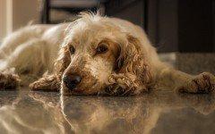 La pancreatite nel cane: sintomi e cause