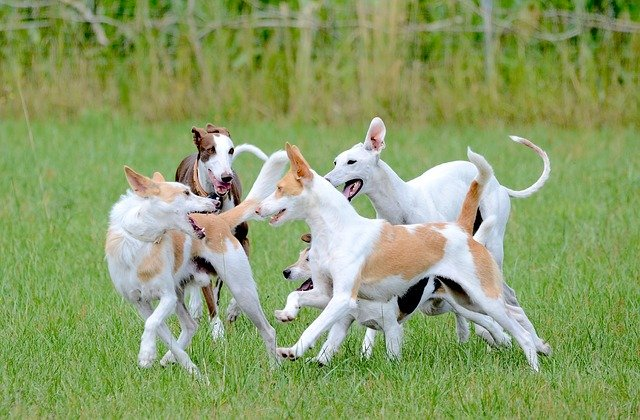 Testing your dog´s DNA today is actually pretty easy to do and not as expensive as you might think. A dog DNA test can be very useful.