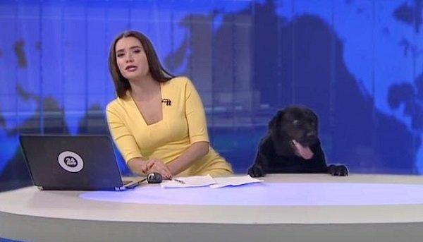 Russia, un cane ospite al tg a sorpresa