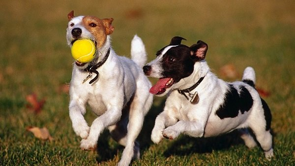 Dog toys your pet will actually enjoy