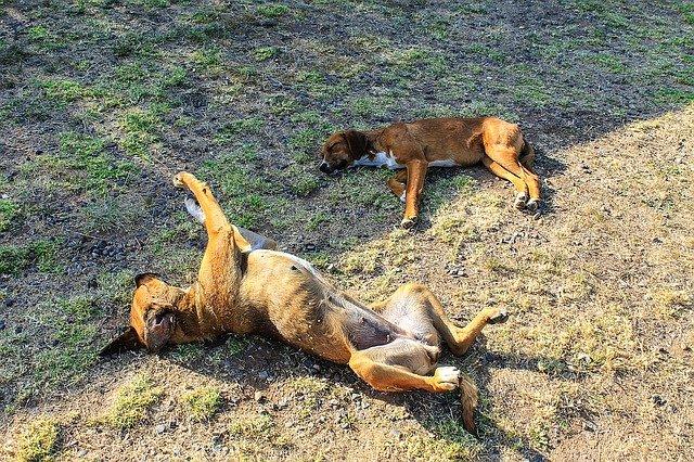 I cani muovono le gambe nel sonno, perchè?