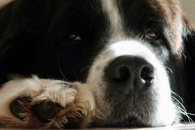 Cura delle zampe del cane: prevenzione e rimedi